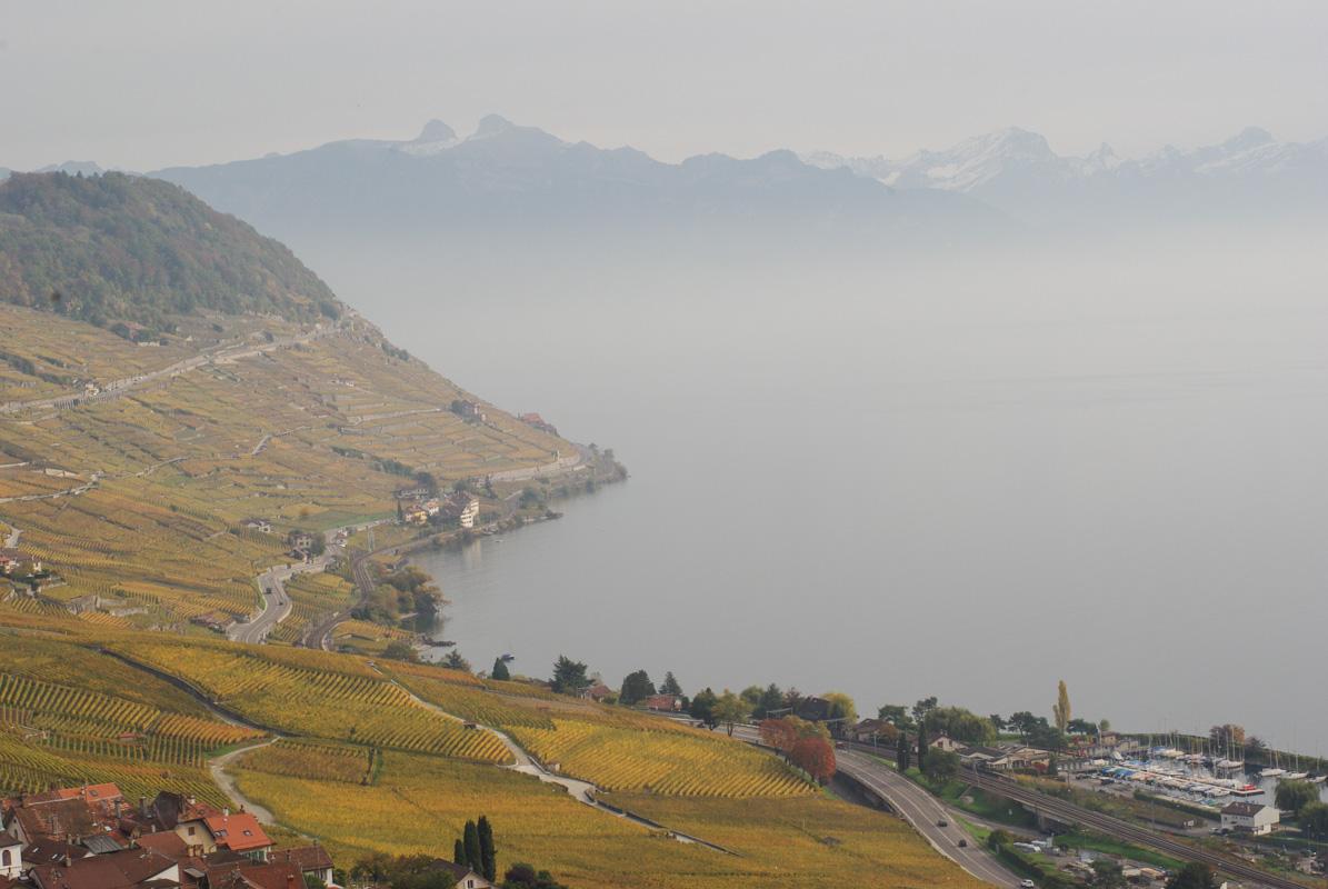 Les coteaux du Lavaux et le lac Léman - Suisse