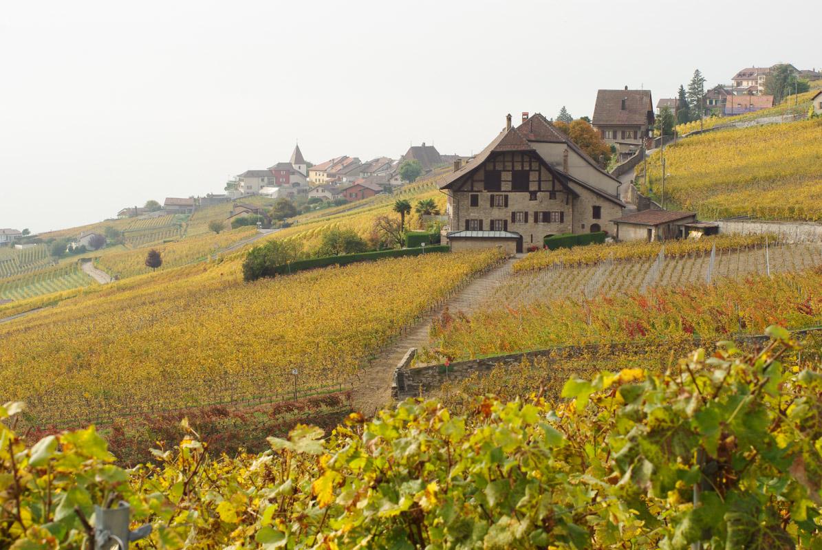 Les coteaux du Lavaux - Suisse