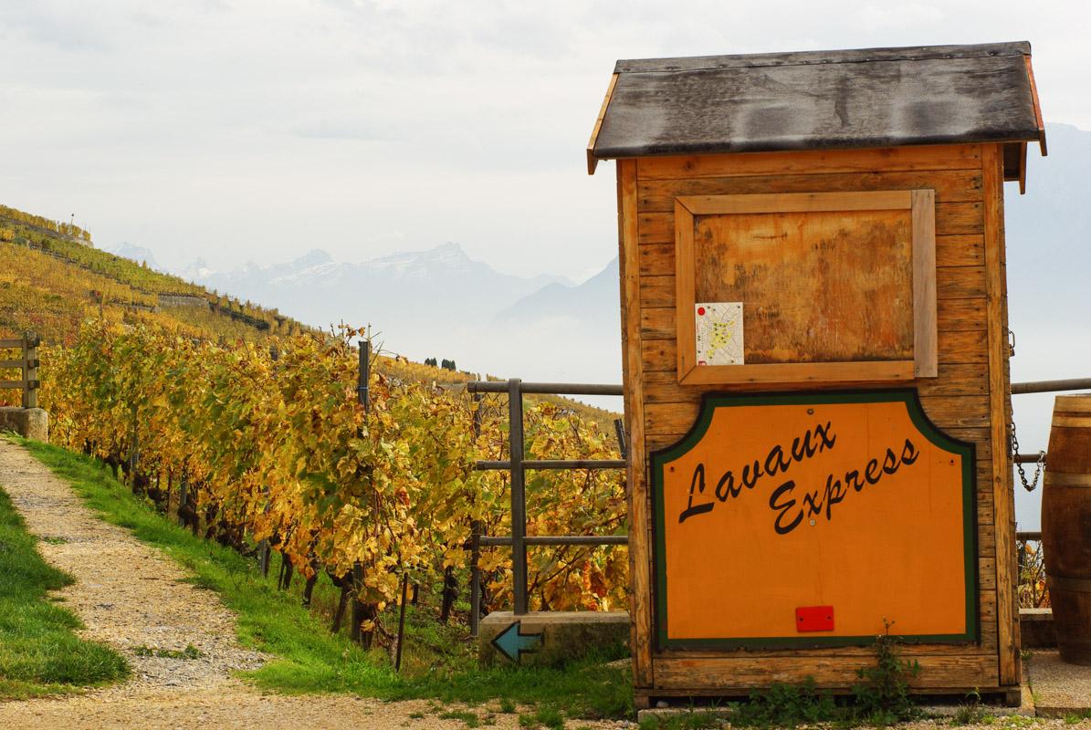 vignes Lavaux Express - Suisse