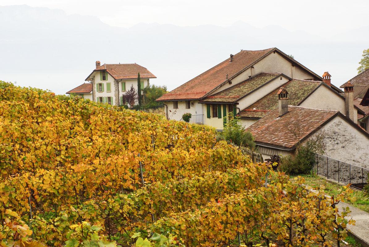 Maisons au coeur du coteaux du Lavaux - Suisse