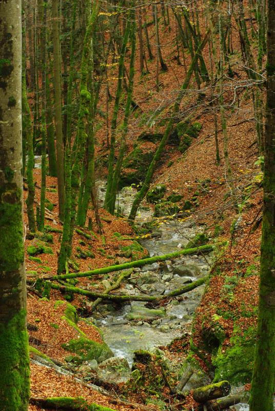 Les couleurs d'automne aux Gorges de Covatannaz - ruisseau Arnon - Canton de Vaud