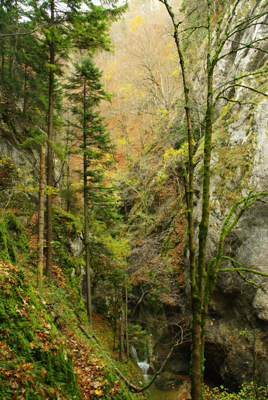Gorges de Covatannaz - petite cascade de l'Arnon