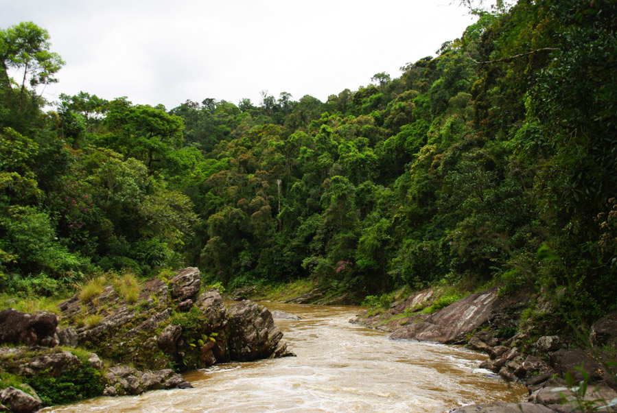riviere dans le parc de ramomafana