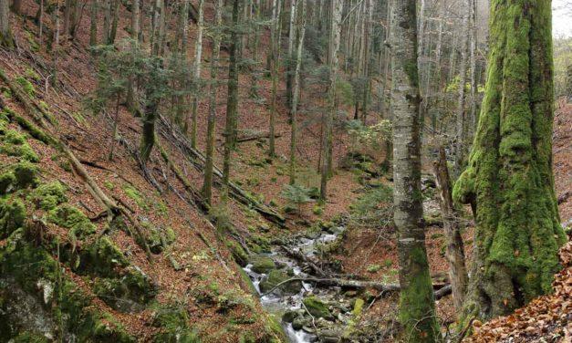 Randonnée automnale dans les gorges de Covatannaz