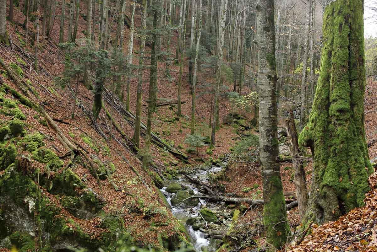 les gorges de Covatannaz dans le Jura Suisse