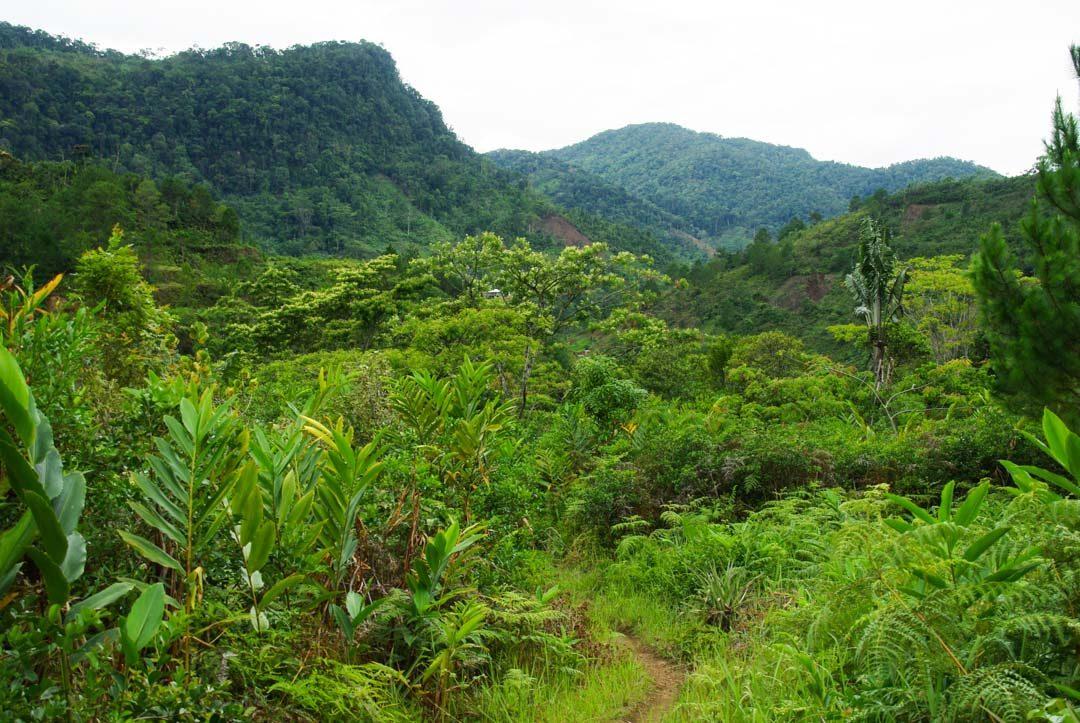 paysage du parc national de Ranomafana