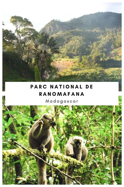 Visiter le Parc National de Ranomafana à Madagascar pour observer les lémuriens dans leur milieu naturel