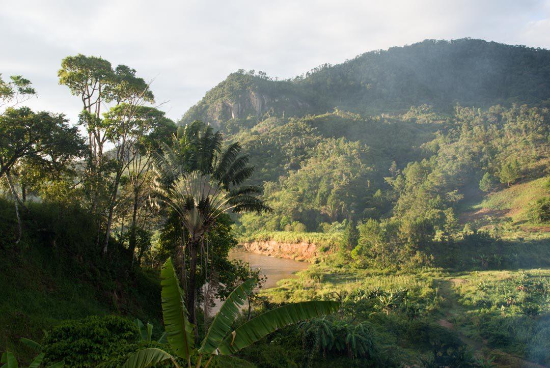 Parc National de Ranomafana - Madagascar