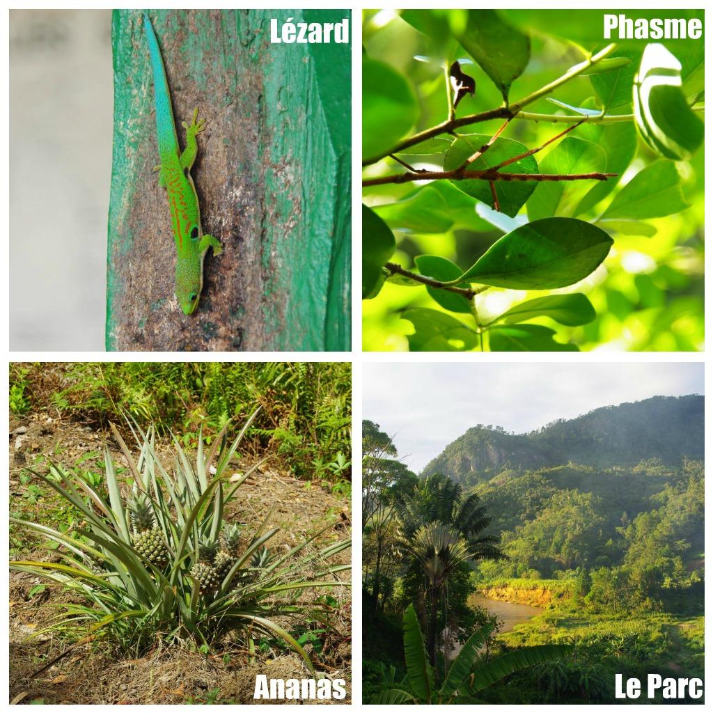 mosaique de photos du parc de ranomafana