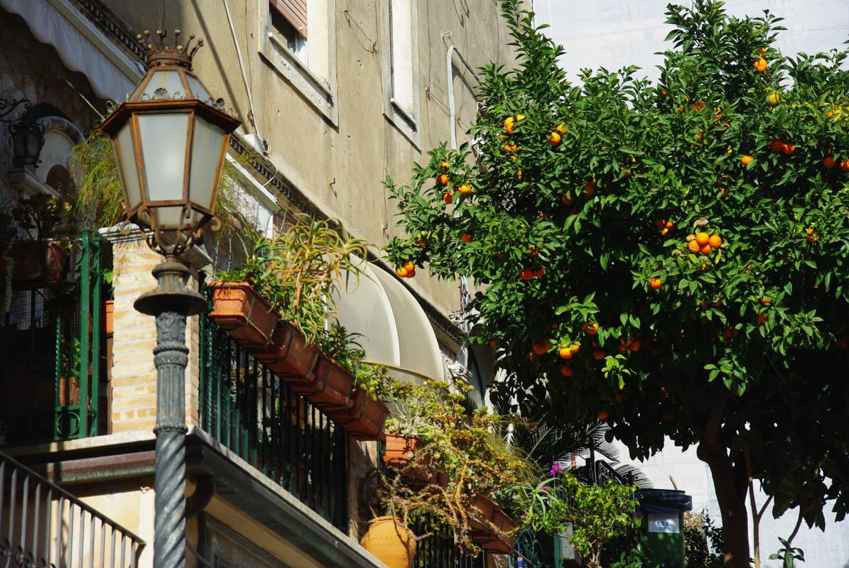 Un oranger dans les rues de Taormina - Sicile