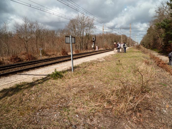 l'arrêt SNCF en forêt de Fontainebleau
