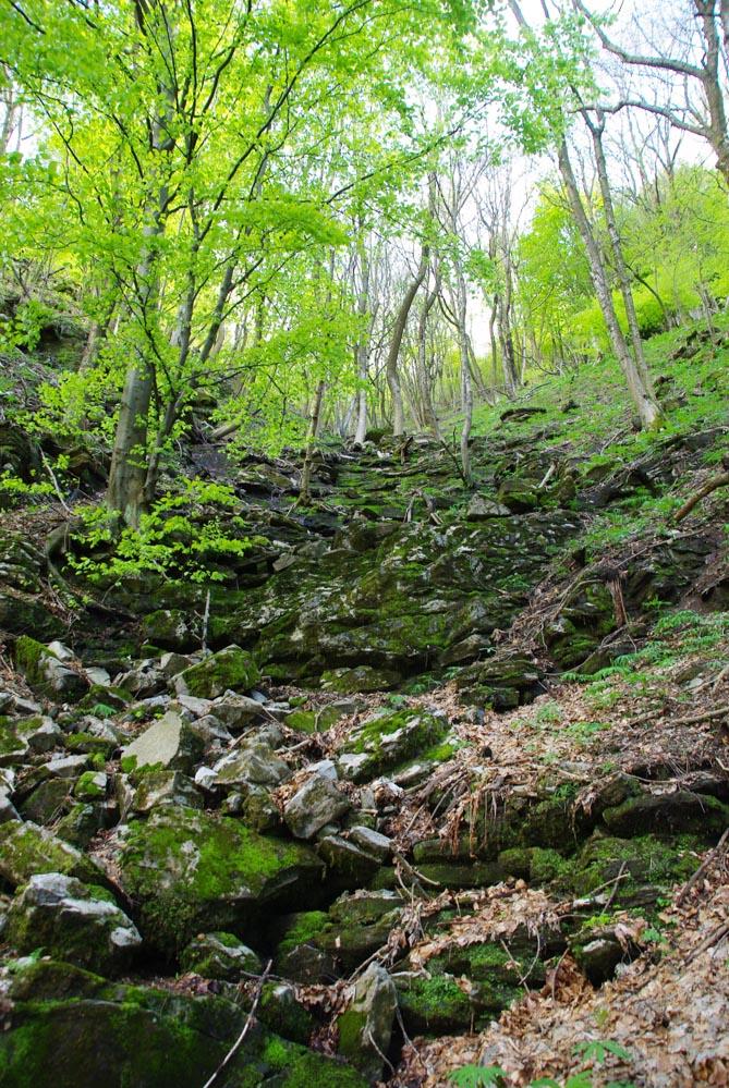 La forêt en contrebas de la dorsale du lac de Côme