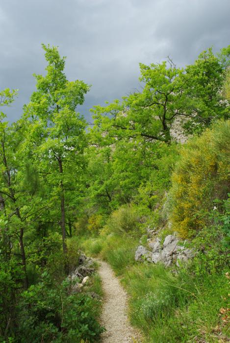 sentier botanique de Tréguier