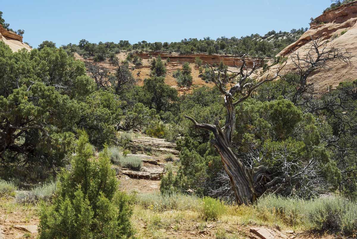 arbre mort - colorado national monument