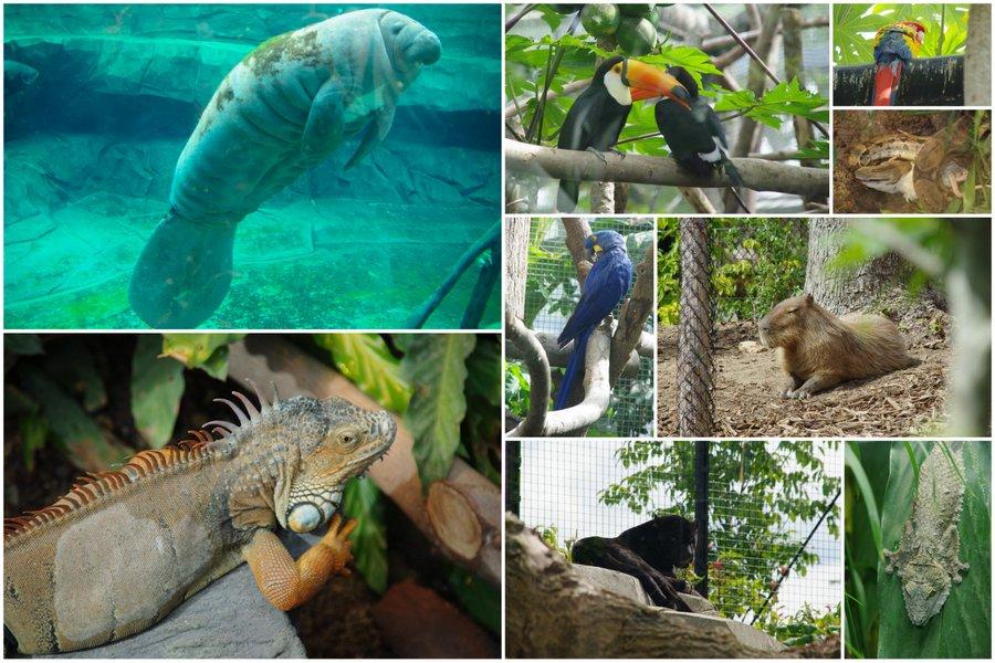 animaux de la zone Guyane - zoo de Paris