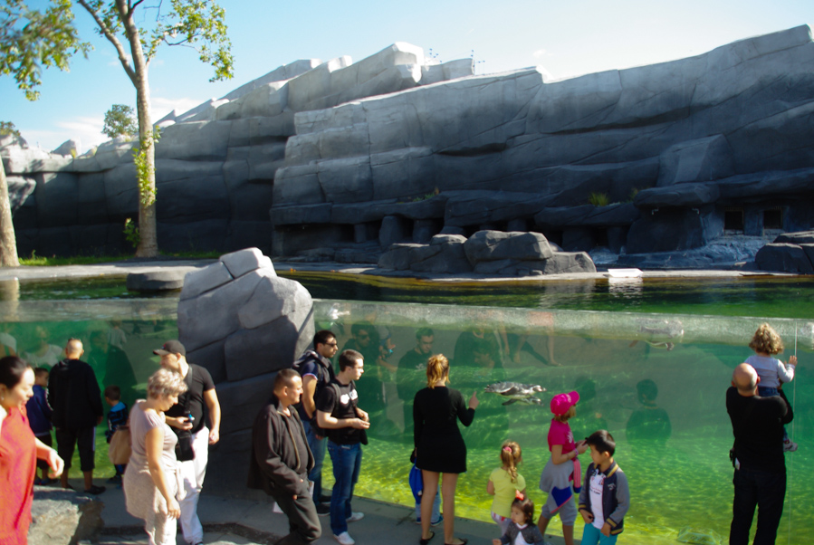 Bassin des manchot - Zoo de Paris