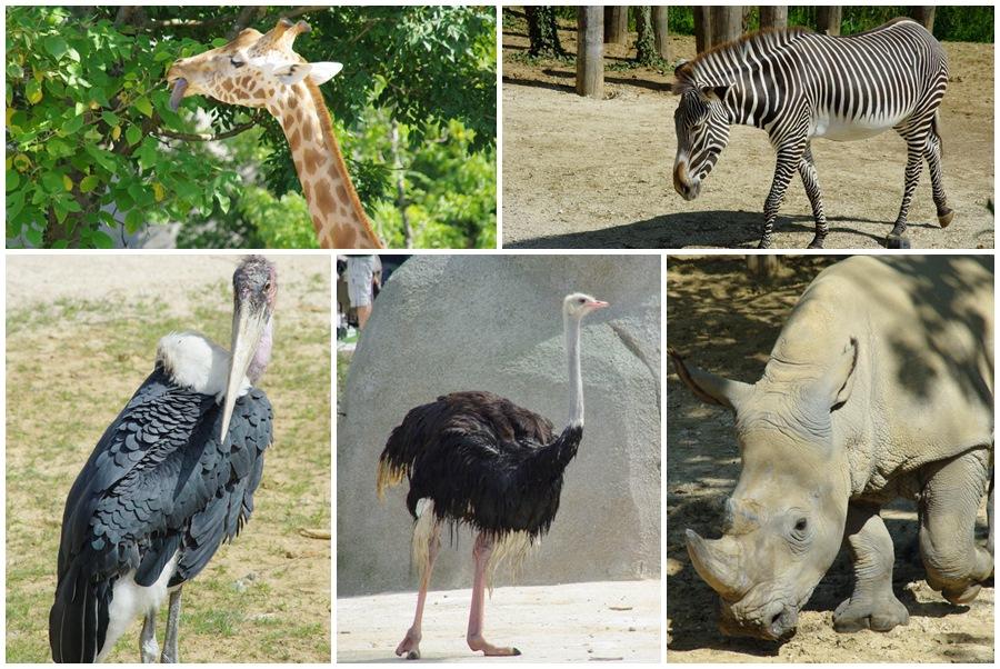 Animaux d'Afrique - Zoo de Paris