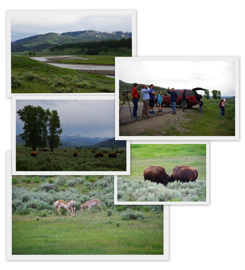 mosaique Lamar Valley - Parc National de Yellowstone