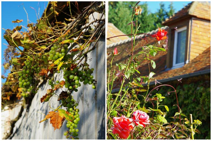 raisins et fleurs du perche