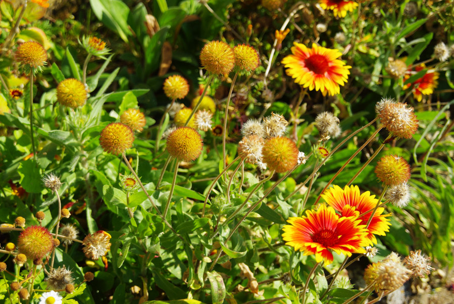 des jolis fleurs sauvages