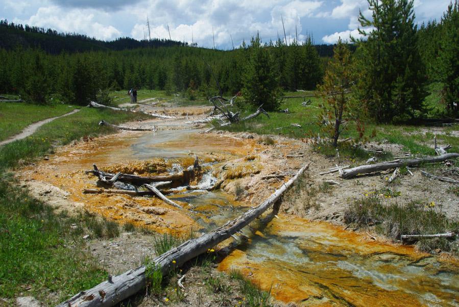 rivière chaude traversant une foret de sapin - yellowstone