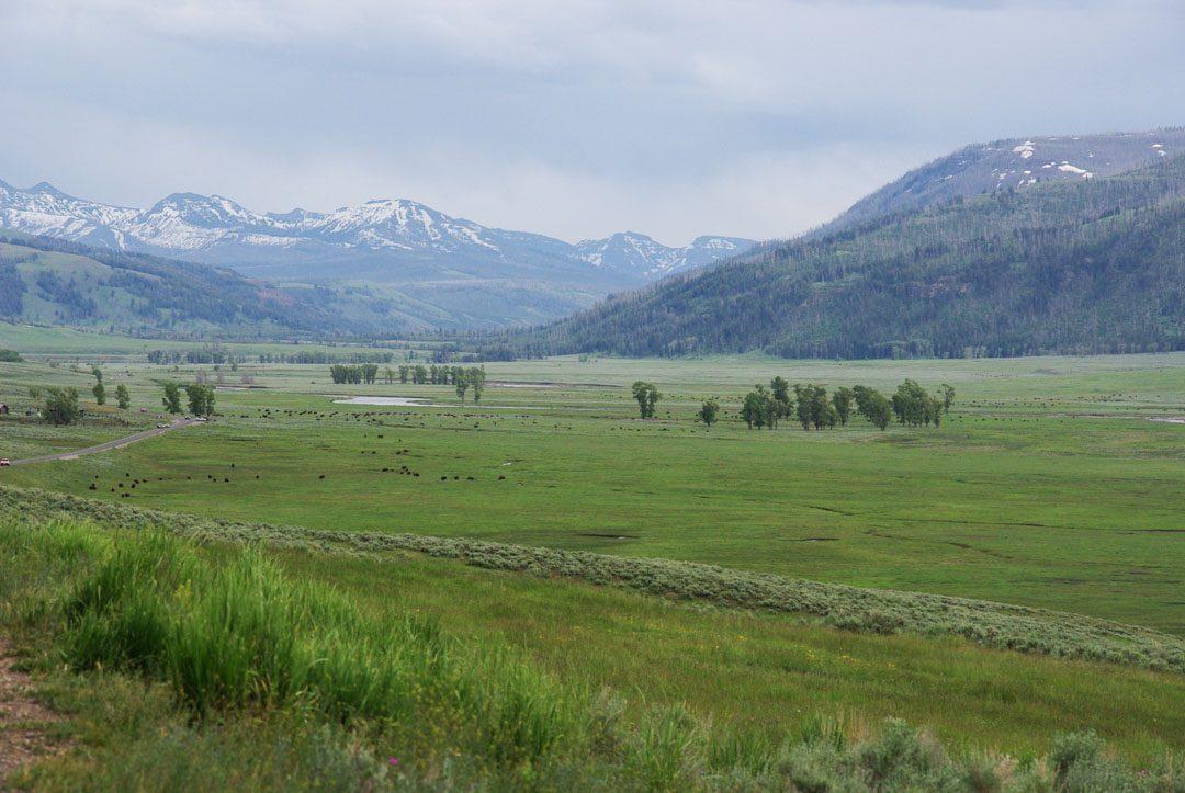 Vue panoramique sur la Lamar Valley - Yellowstone