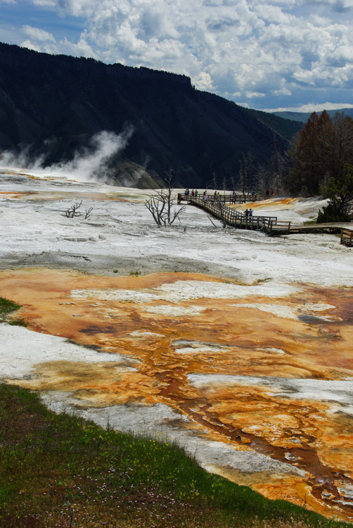 Mammoth Lower Terraces à Yellowstone