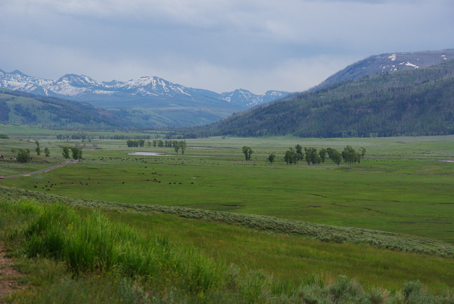Lamar Valley - Parc national de Yellowstone