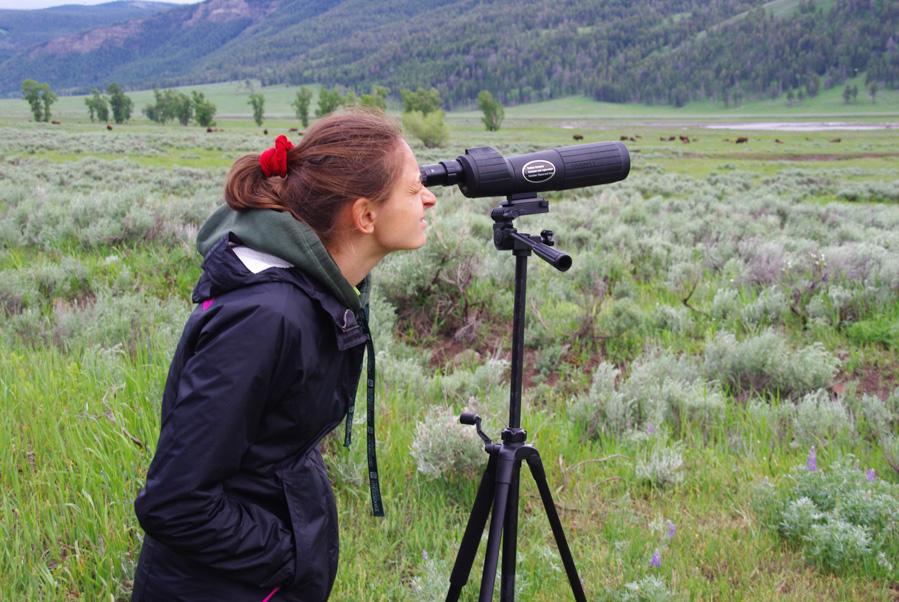 observer les animaux sauvages avec une longue vue - Lamar Valley - Parc national de Yellowstone