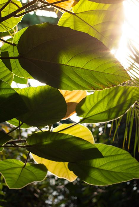 la lumière du soleil filtrant à travers des feuilles