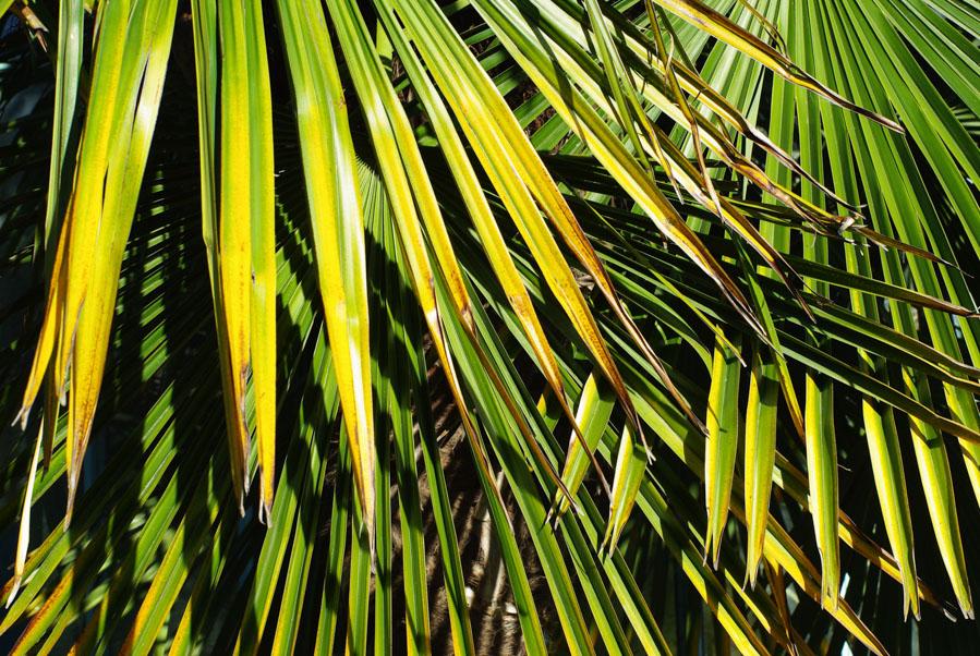 zoom sur des feuilles de palmier