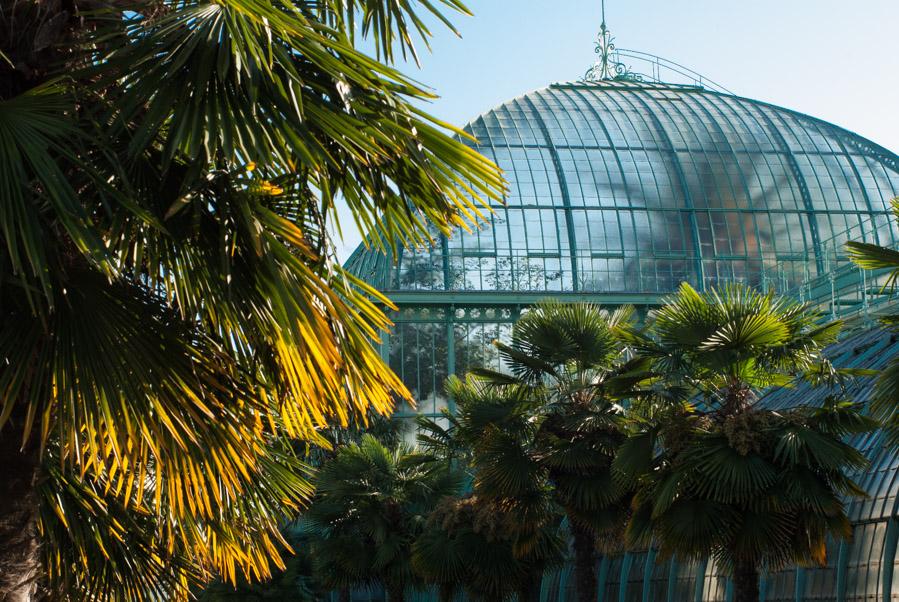 Serres d'Auteuil - la grande verrière du palmarium