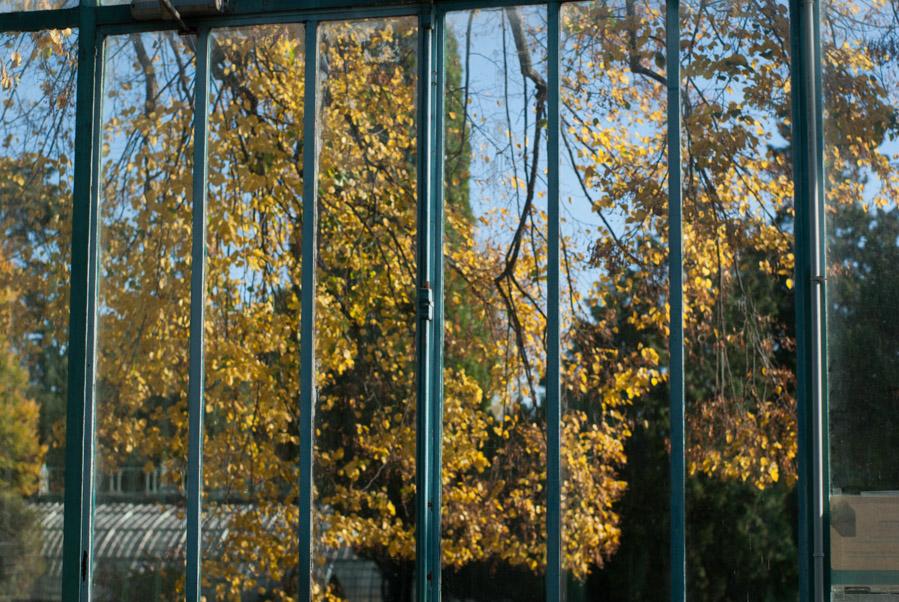 Couleurs d'automne aux Serres d'Auteuil
