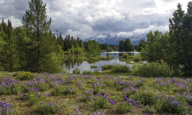 Visite de Grand Teton National Park