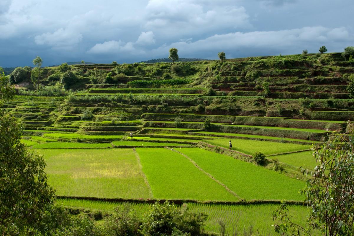 Rizières dans les environs de Betafo - Madagascar