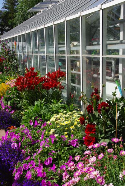 Serre du jardin botanique d'Akureyri - Islande