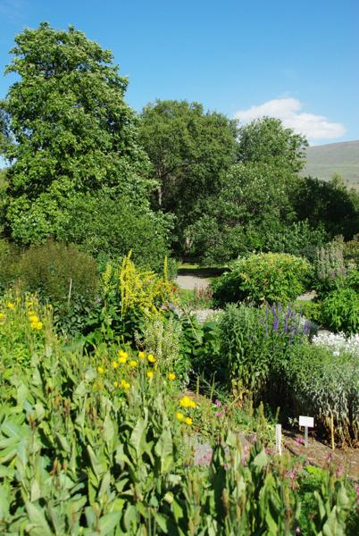 jardin botanique Akureyri