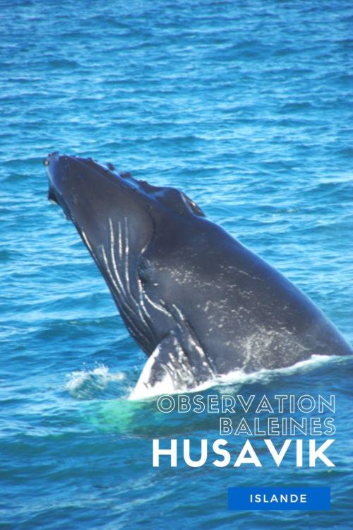 Excursion à Husavik pour observer les baleines - Islande