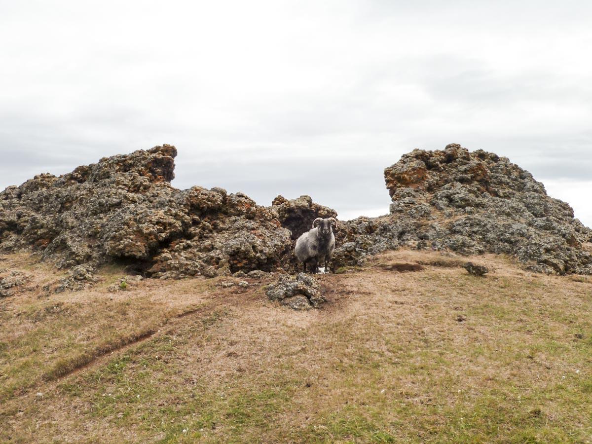 les pseudo-crateres près de Myvatn