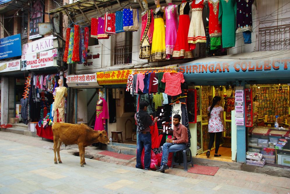 une vache dans les rues de Katmandou