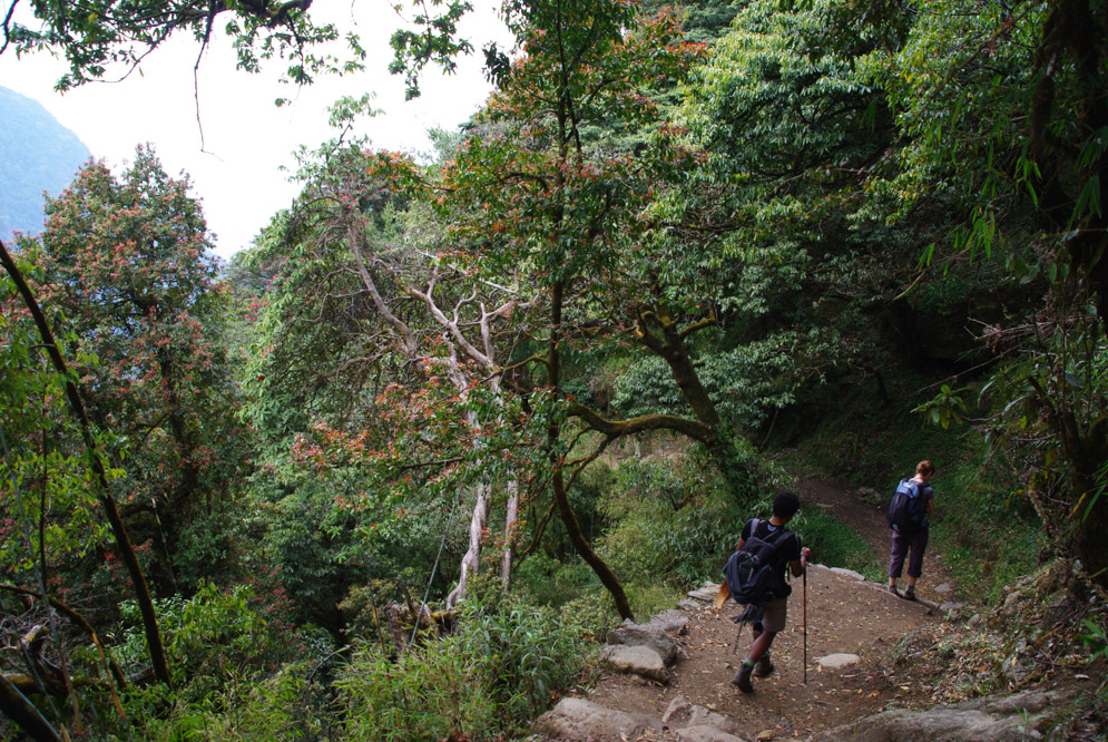 Sur le chemin du sanctuaire des Annapurnas