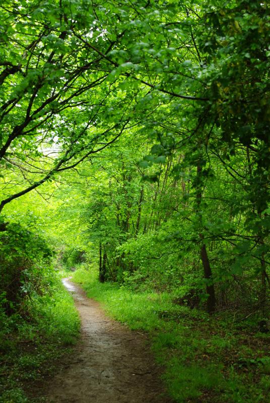chemin de randonnée le long de la Vis