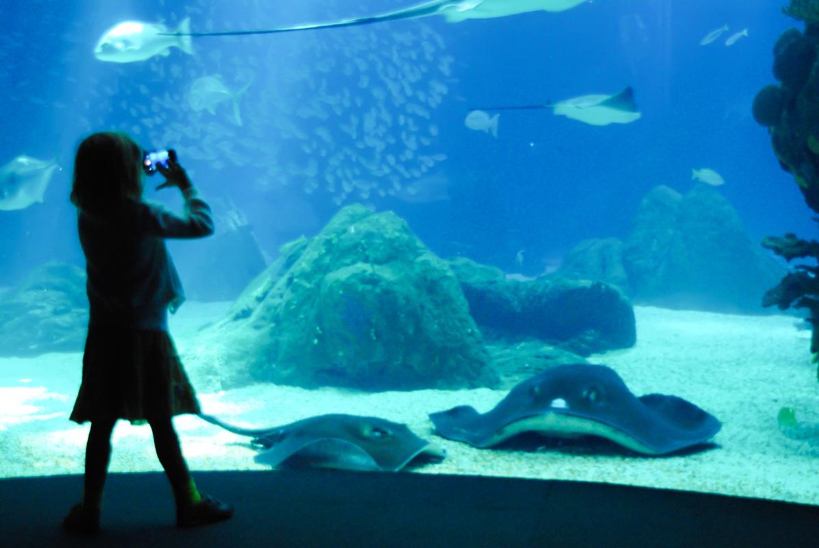 le grand bassin de l'aquarium de Lisbonne