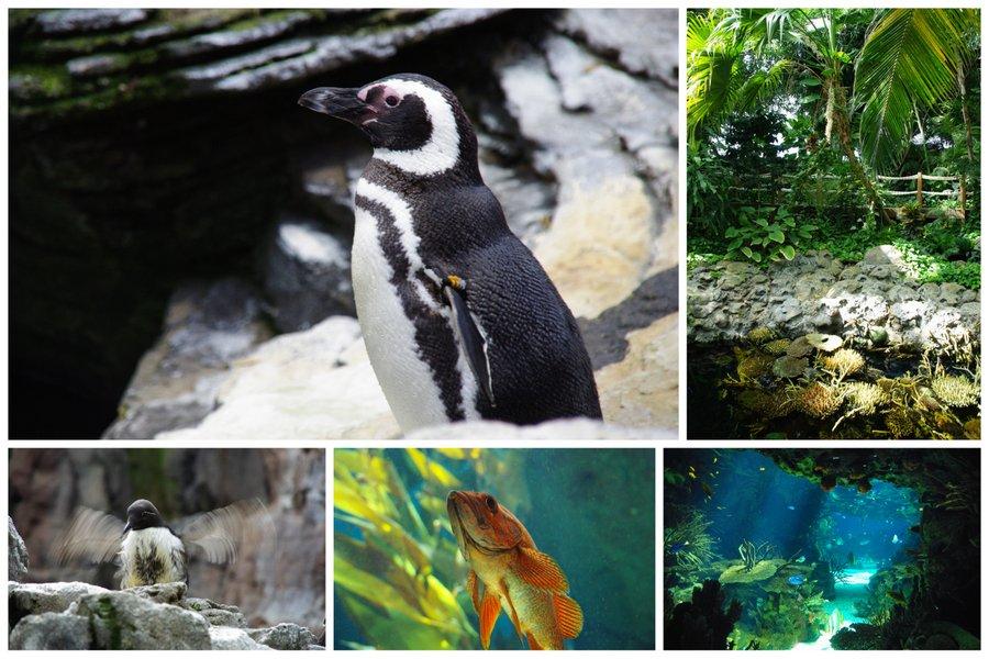 mosaique photo aquarium Lisbonne