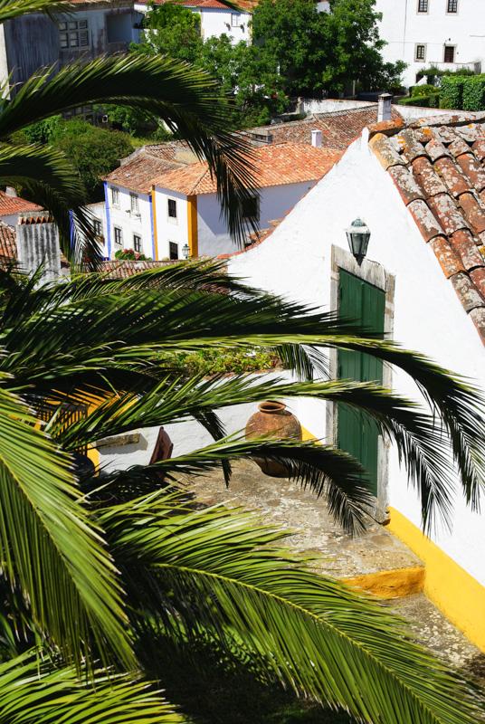 un palmier et les maisons blanches d'Obidos