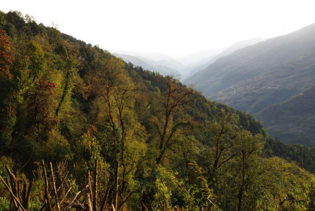 Foret autour de Forest Camp - Népal