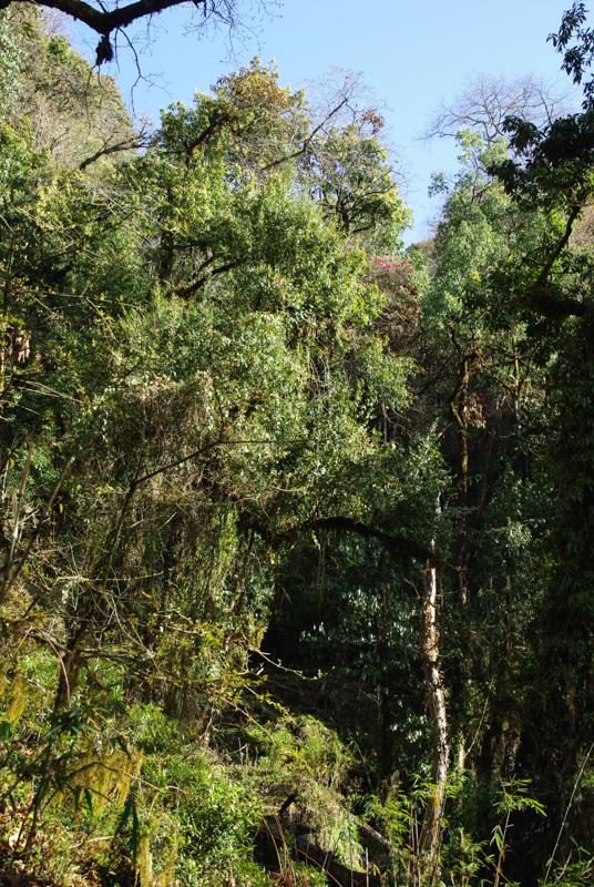 Forêt tropicale - Népal