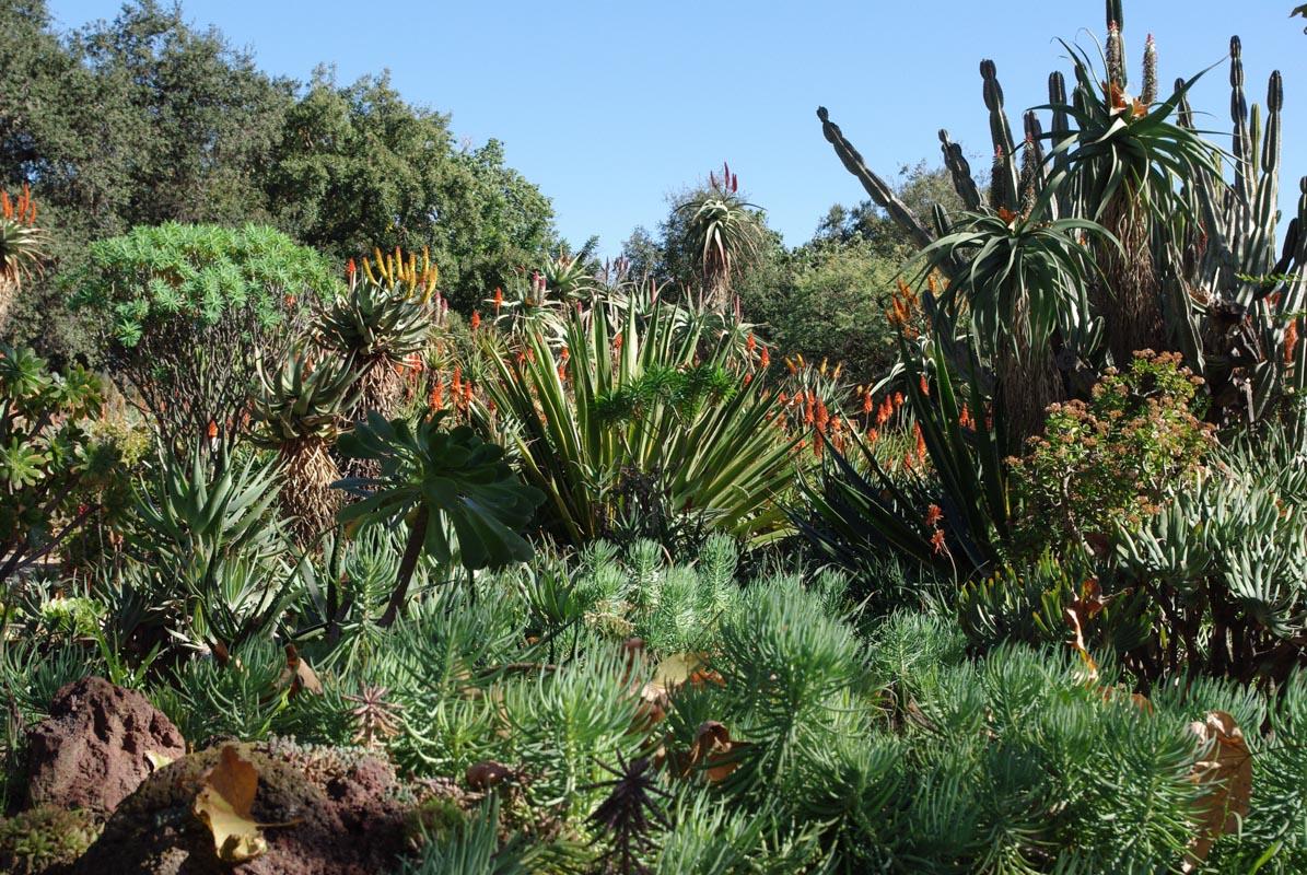 Jardin du désert - Huntington Botanical Gardens