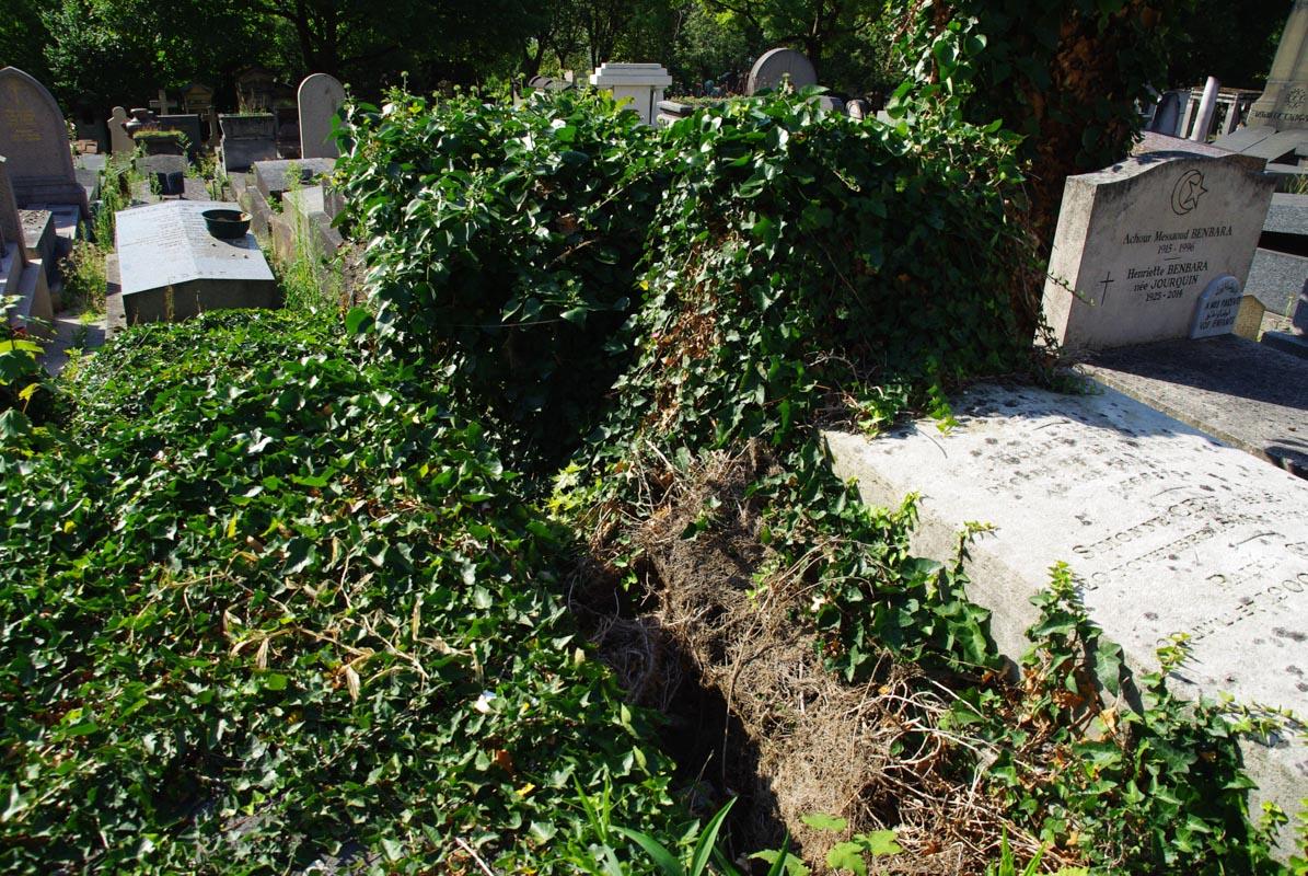 Tombes recouvertes de lière - Père Lachaise - Paris