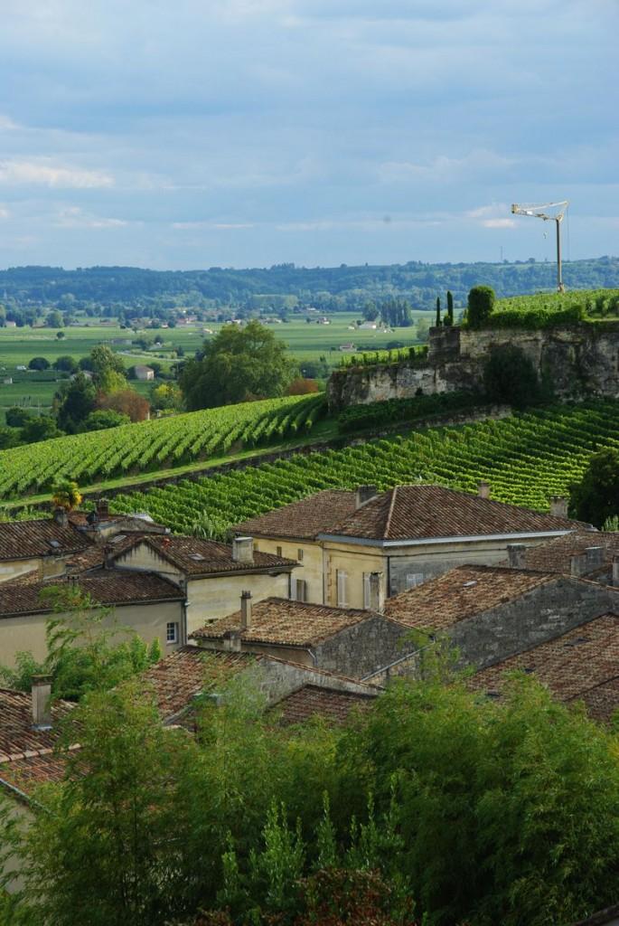 vignes autour de Saint Emilion